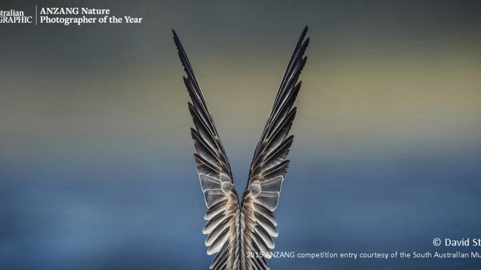 Overall winner 'Feathered Symmetry' by David Stowe