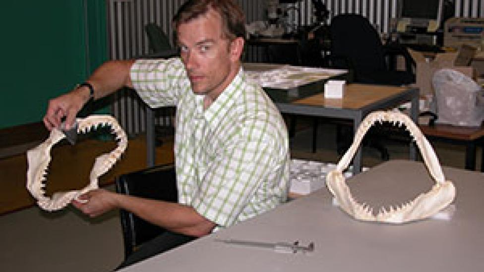 Dr Mikael Siversson holding a large shark jaw