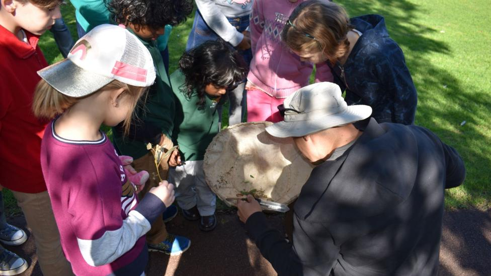 WA Museum entomologist Dr Nik Tatarnic explores insect life with young people.
