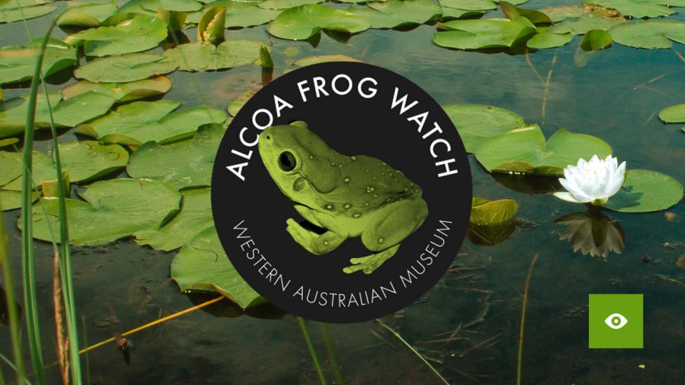 Frog Watch Logo over a pond of lilypads and reeds  Developed by the WA Museum