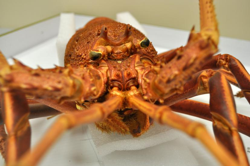 A behind-the-scenes look at our crustacean collection | Western Australian Museum