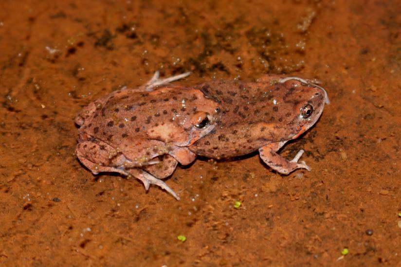 Wildlife Of The Pilbara Western Australian Museum
