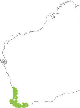Distribution map for Rattling or Clicking Froglet