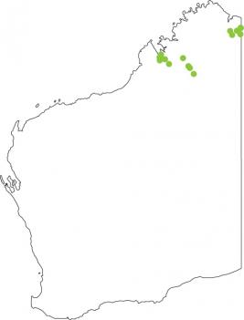 Wailing Frog  Western Australian Museum