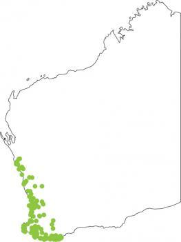 Distribution map for Motorbike Frog