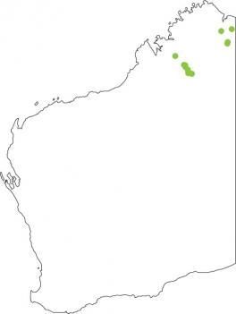 Distribution map for Blacksoil Toadlet