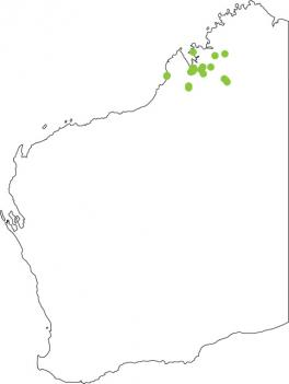 Distribution map for Derby Toadlet