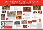 Dangerous Snakes of WA