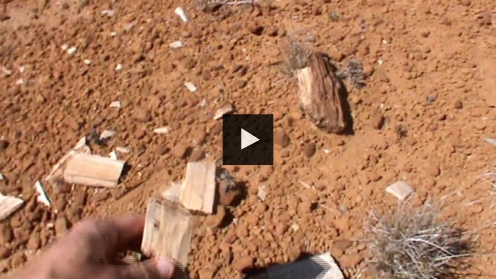 Mikael Siversson hand holding a piece of fossilised wood in the Australian outback